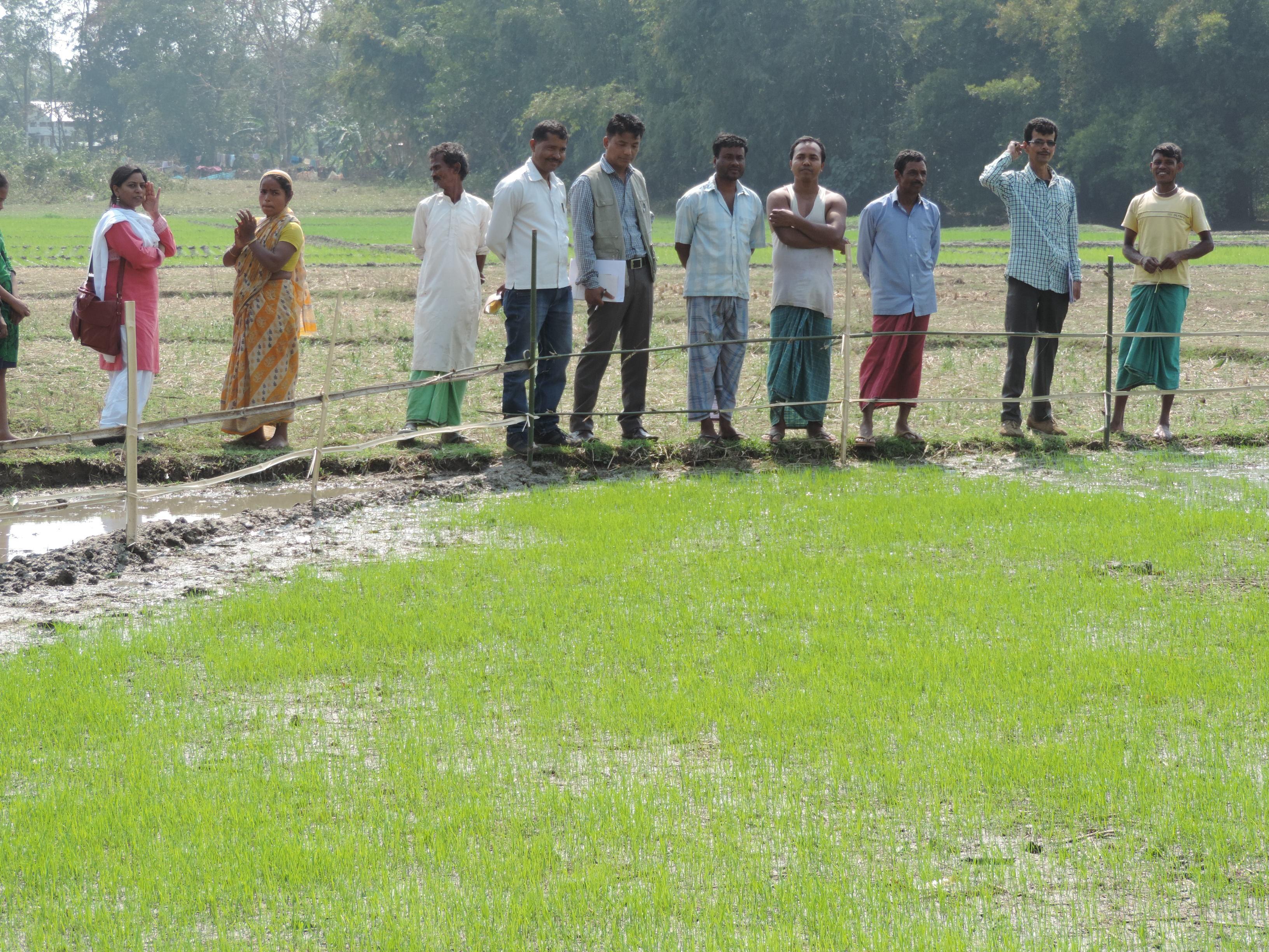 akvo rsr assam livelihood project